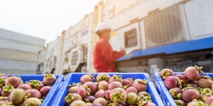 Innovación en la cadena de valor del sector agroalimentario