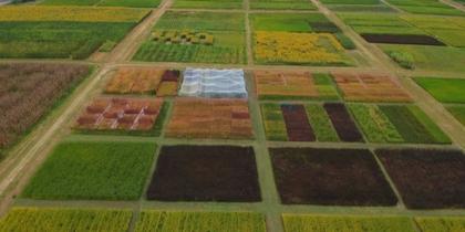 Diversidad de cultivos